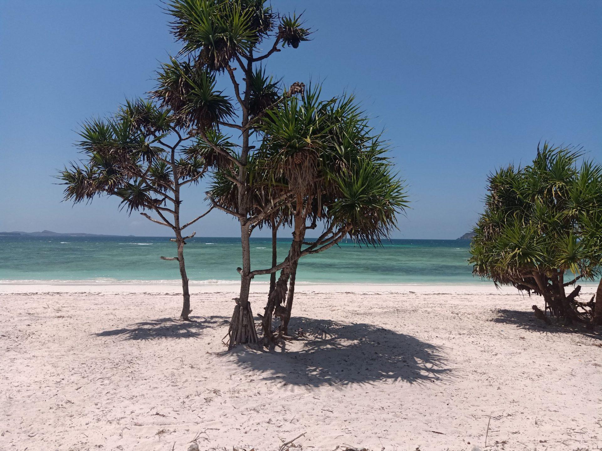Loedi Bungalows Beach Conservation Project